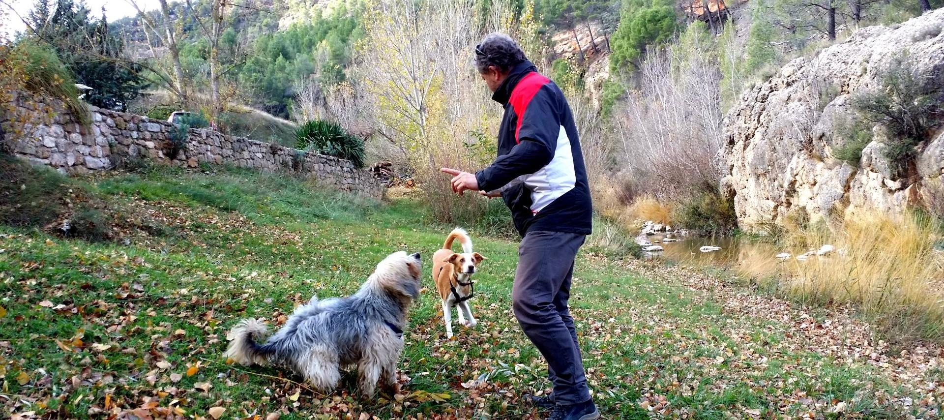 Perro con adiestrador en Viajar Solo